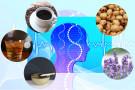 香りと脳との関係