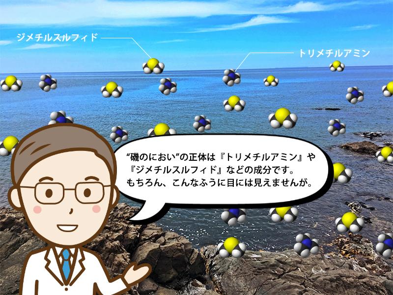 川で海の香りがする原因について